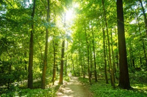 Wald mit Morgensonne als Beispiel